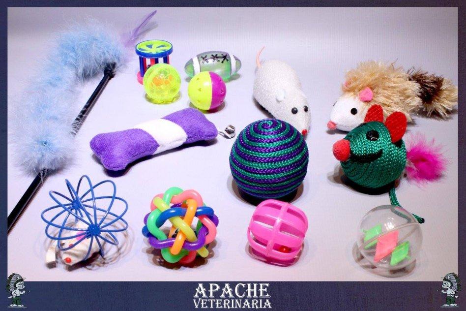 Apache Veterinaria picture