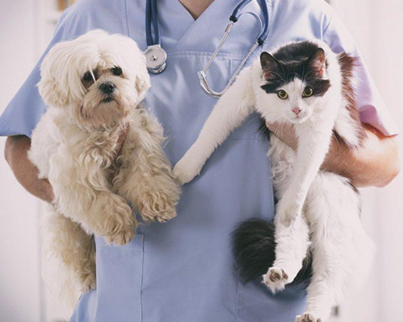 Clínica veterinaria Fabio Di Giovanni picture